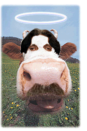 Chief Justice Sacred Cow